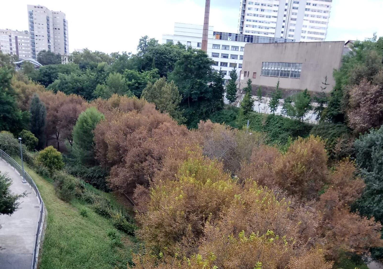 Els arbres de color marronós al Parc de Vallparadís