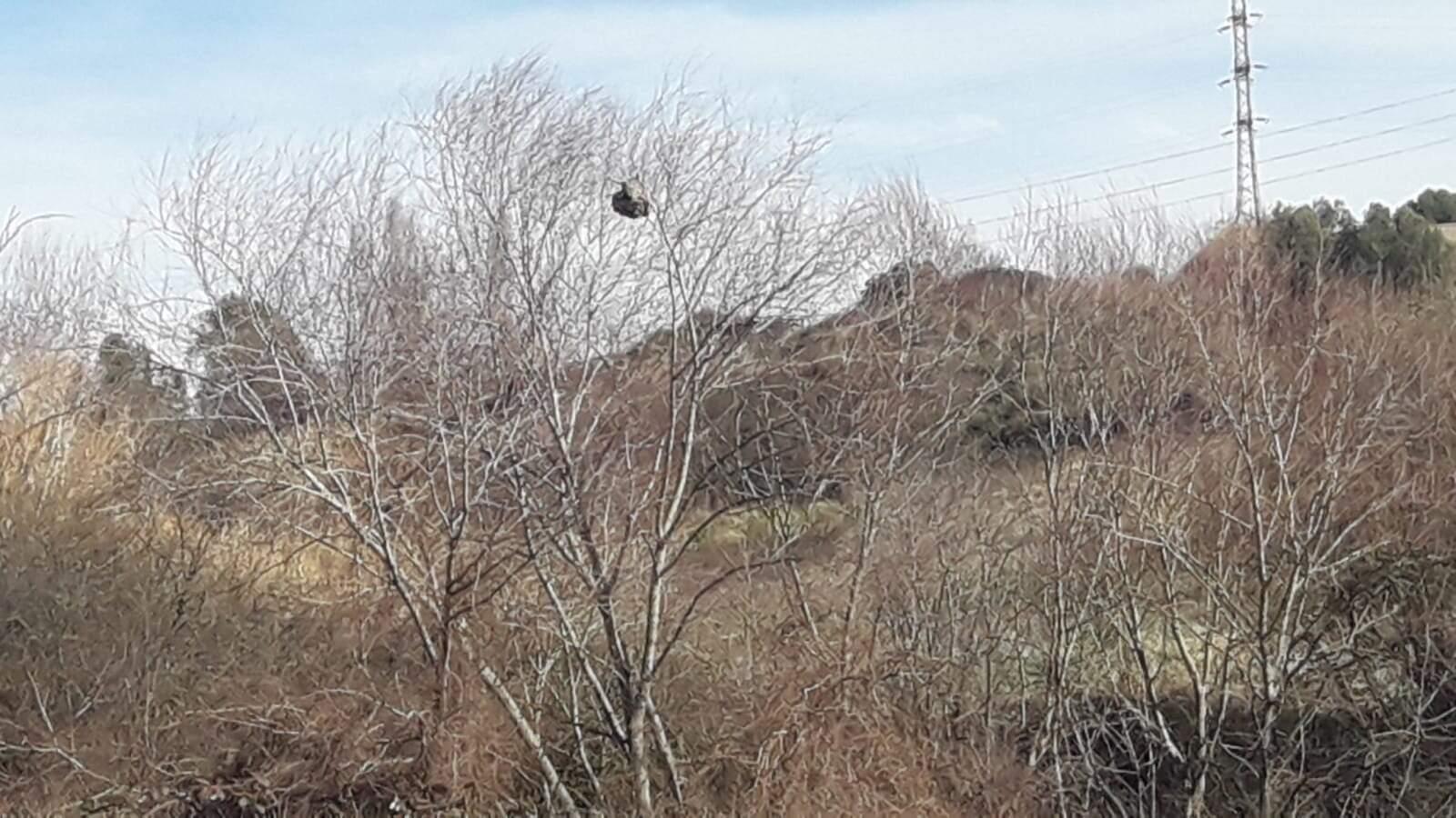 Niu de vespa asiàtixa a la carretera de la gravera i la Fonte Freda