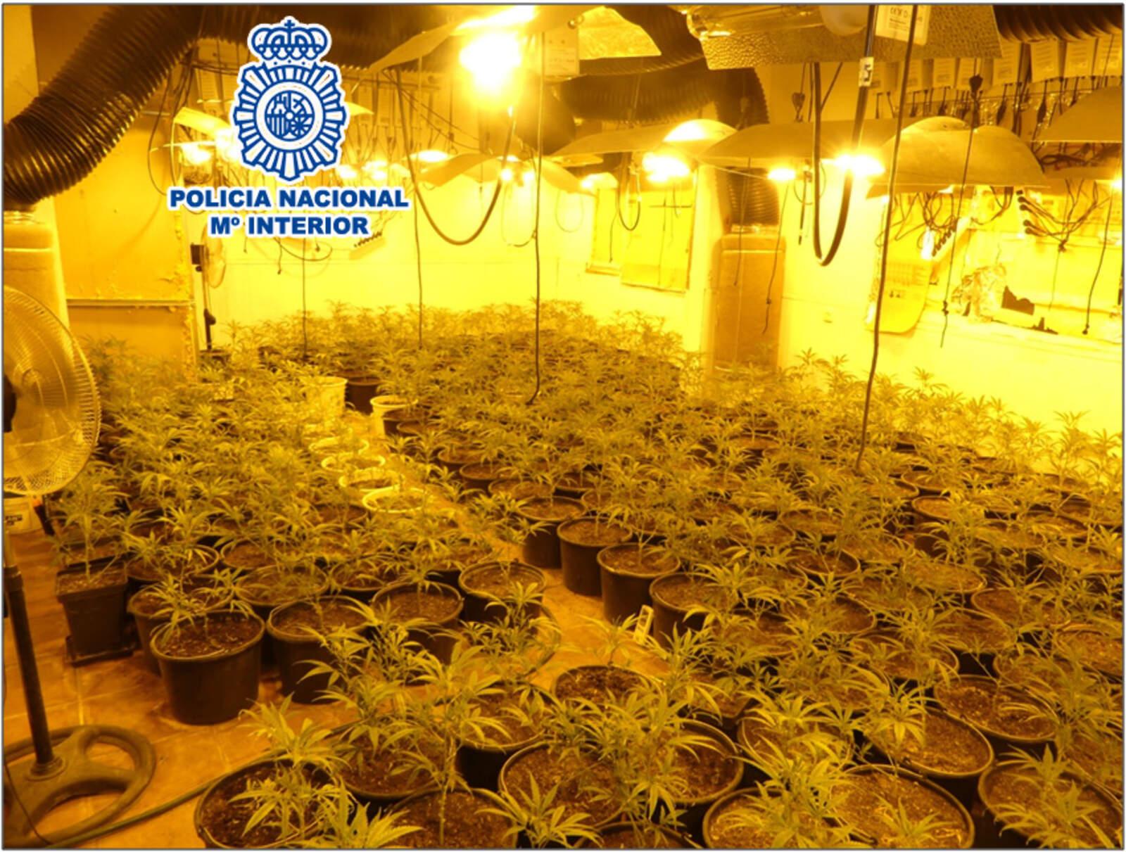 Plantació de marihuana descoberta