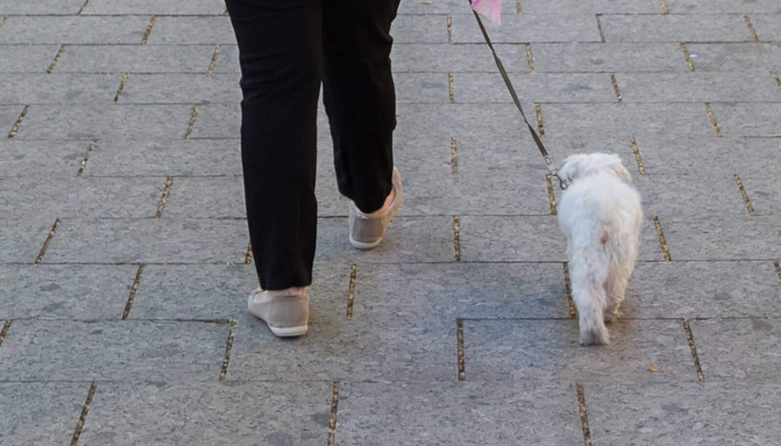 Una veïna passejant la seva mascota. Imatge d'arxiu.