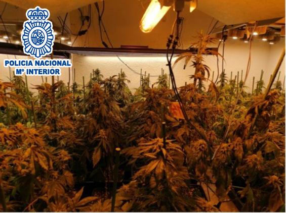 Plantació de marihuana a Vacarisses | Policia Nacional